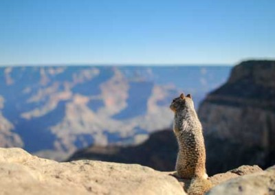 Cute Squirrel Looking At Landscape Of Mountains
