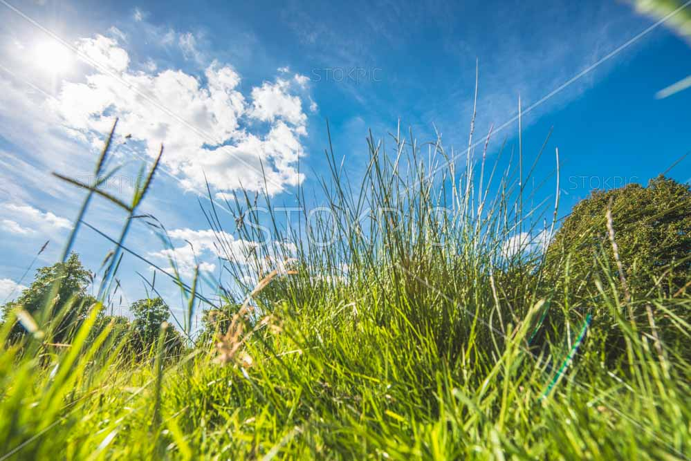 Healthy Green Grass With Blue Summer sky