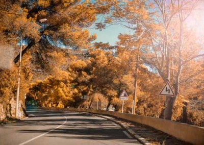 Road Winding Through Autumn Trees In Fall